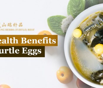 Turtle Eggs Benefits