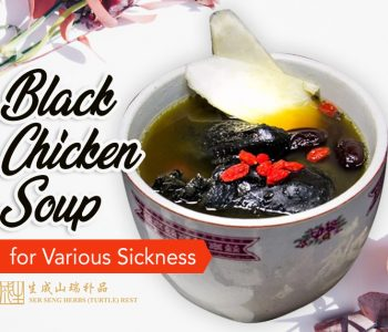 back chicken soup as remedy for various illnesses